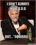 most-interesting-squirrel
