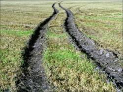 rut-on-a-grassy-field_mediumthumb.jpg