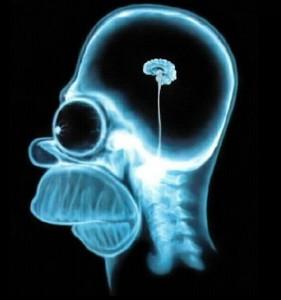 brain1-e1312872869675-281x300